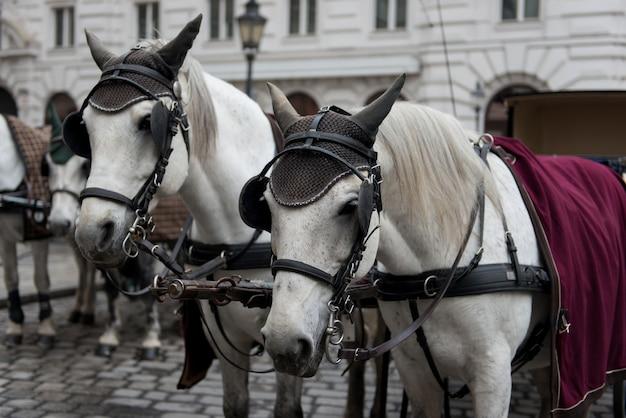 Wien. österreich. pferde mit kutschen und karren warten auf touristen in den alten straßen der stadt.