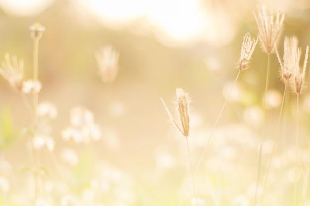 Wiese blüht am frühen sonnigen neuen morgen.