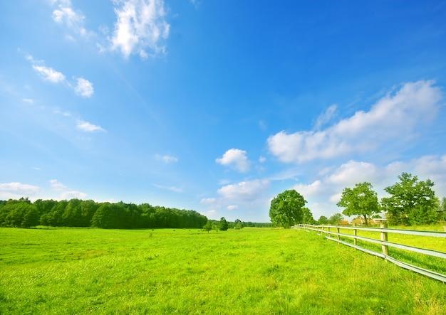 Wiese mit bäumen und einem holzzaun