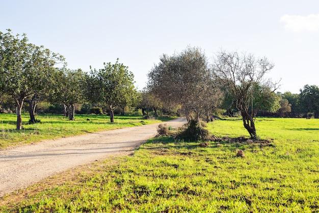 Wiese und bäume im sonnenlicht