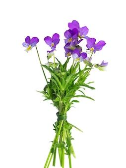Wiesenblumen ein strauß lila und gelber veilchen