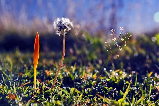 Wiesenblumen im morgengrauen nahaufnahme