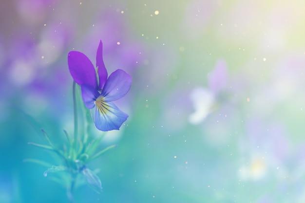 Wiesenblumen lila und gelbe veilchen im gras