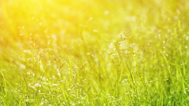 Wiesengras am sonnigen tag