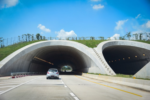Wild lebende tiere, die vorbei auf landstraße in den waldwegtunnel-verkehrsauto brückentieren über einer landstraße kreuzen