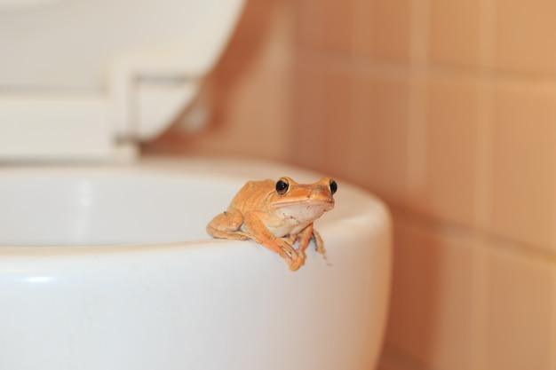 Wild lebende tiere dringen in das haus ein, frosch im badezimmer