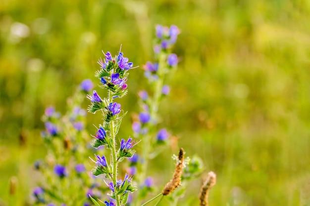 Wildblumen auf unscharfem hintergrund bei sonnigem wetter