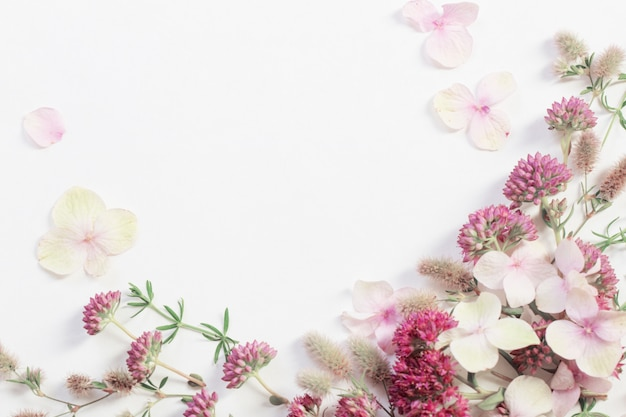Wildblumen auf weißem papierhintergrund
