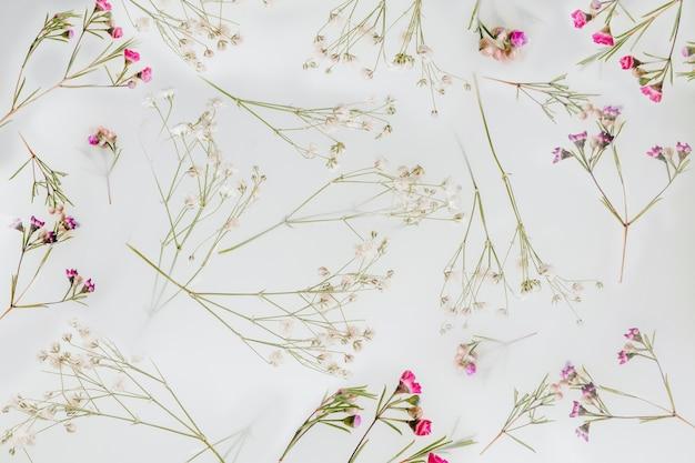 Wildblumen hintergrund