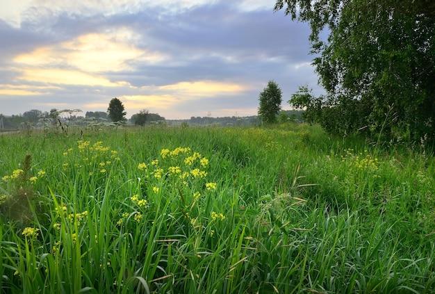 Wildblumen im dichten gras auf dem feld morgens bei bewölktem himmel