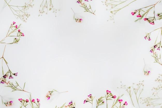 Wildblumen mit exemplar