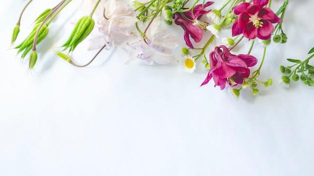 Wildblumen von aquilegia und kamille auf einem weißen hintergrund. flache lage, draufsicht, kopierraum