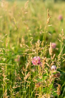Wildblumennahaufnahme auf einer wiese in einem dorf, sommererholung im freien