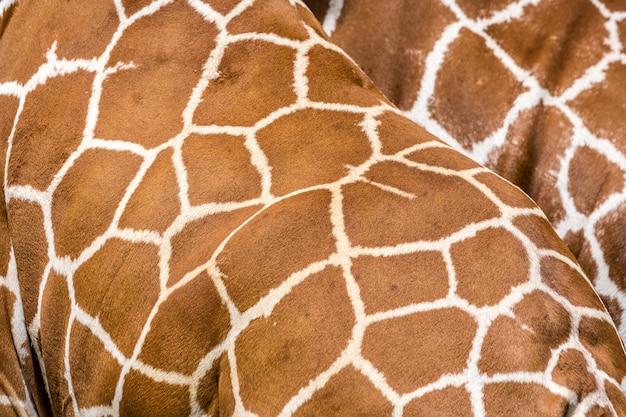 Wilde afrikanische tiere