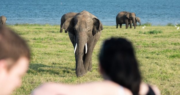 Wilde elefanten in einer schönen landschaft in sri lanka