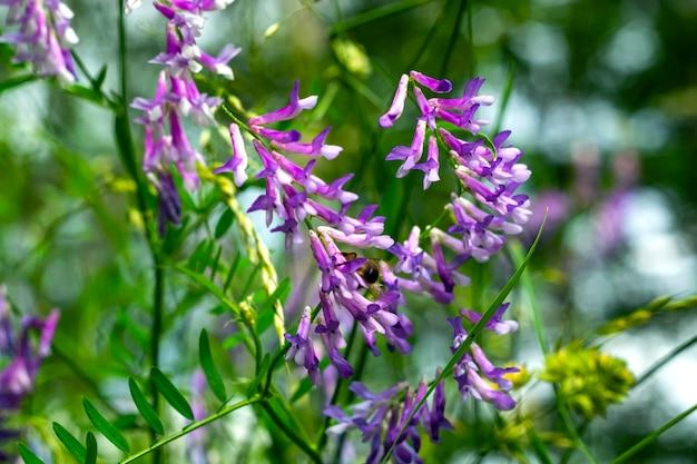 Wilde gelbe blumen mit einer biene, die blütenstaub gegen einen tiefen blauen himmel sammelt.
