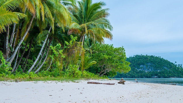 Wilde kokosnuss-palmen auf friwen-insel, wand, west-papua, raja ampat, indonesien
