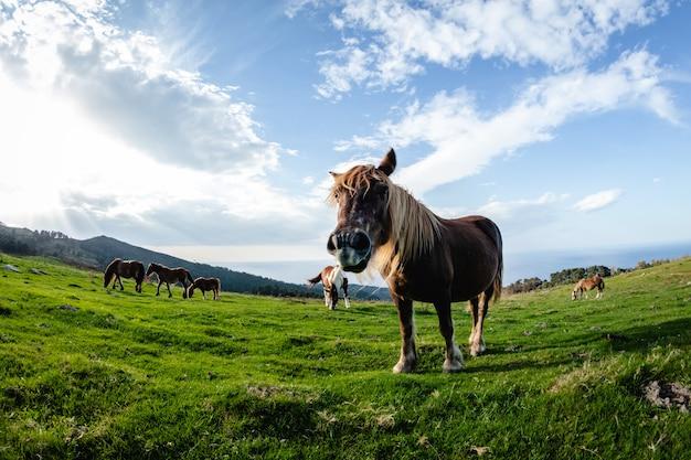 Wilde lustige pferde im grünen berg