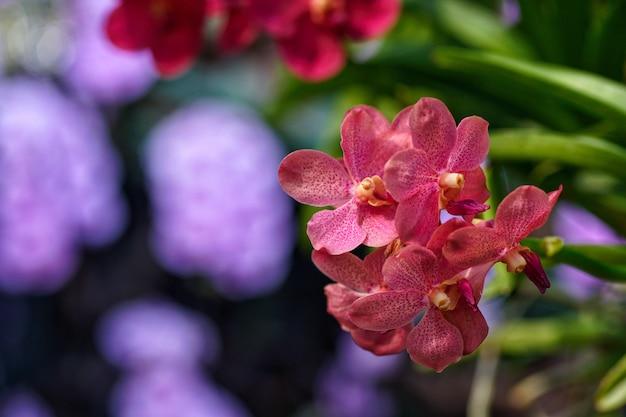 Wilde orchidee in der farm