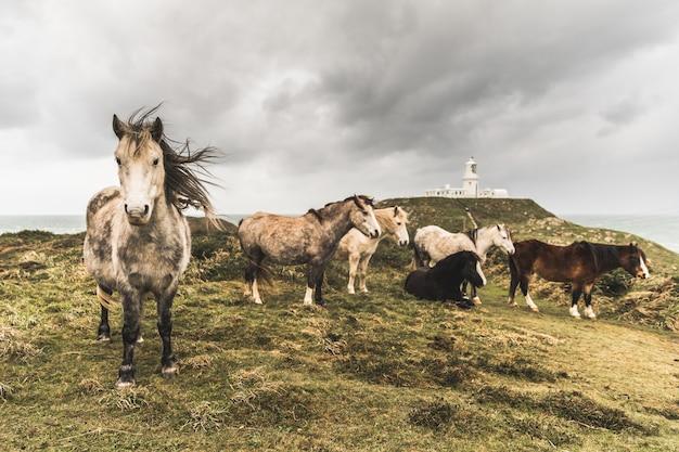Wilde pferde auf dem lande an einem stürmischen tag
