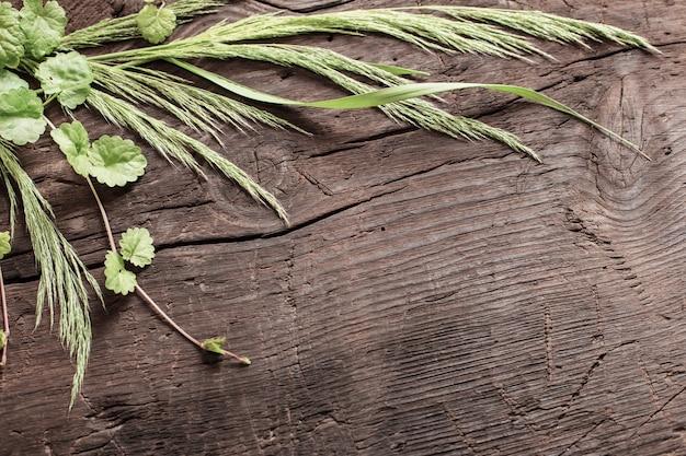 Wilde pflanzen auf altem dunklem hölzernem hintergrund