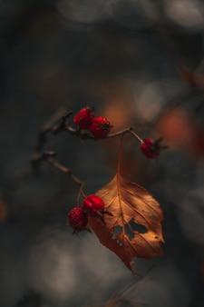 Wilde rote beeren wachsen auf trockenem herbstbaum auf unscharfem herbsthintergrund herbstliche saisonpflanze