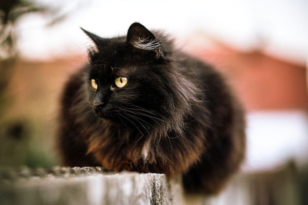 Wilde schwarze katze mit grünen augen
