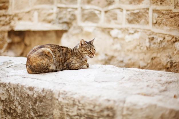 Wilde stadtkatze, die auf einer steinmauer sitzt