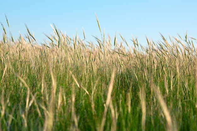 Wilde steppe an einem sommertag, region ukraine, kherson