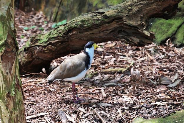 Wilde tiere am taronga-zoo in sydney, australien