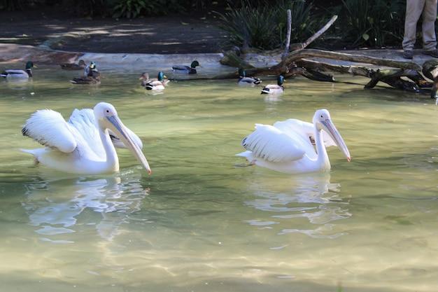 Wilde tiere in einem zoo. natürliche landschaft.