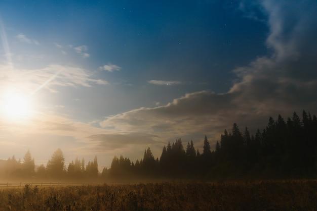Wilde waldsilhouette auf dem berg unter sternennachthimmel. schöne silhouetten von nadelbäumen auf einem hügel in dunkler sternennacht.