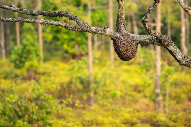 Wilder bienenstock auf dem baum und dem verschwommenen waldhintergrund