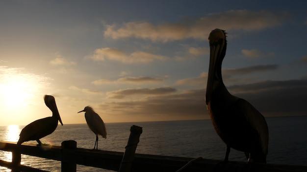 Wilder brauner pelikan am pier, california ocean beach usa. pelecanus großer vogel. großer schnabelschnabel. sonnenuntergang.