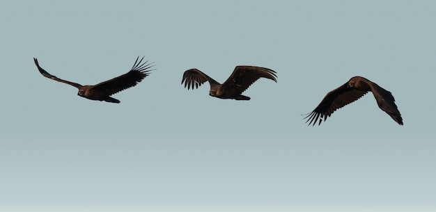 Wilder geier fliegt über den himmel