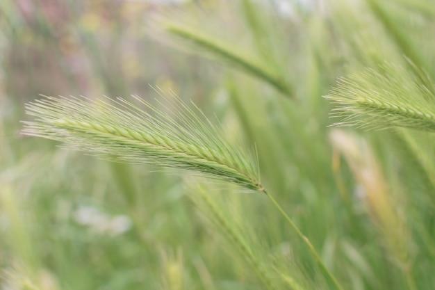Wilder grüner spitzenhintergrund mit selektivem fokus