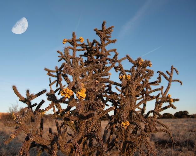 Wilder kaktusbusch mit gelben blumen in der wüste