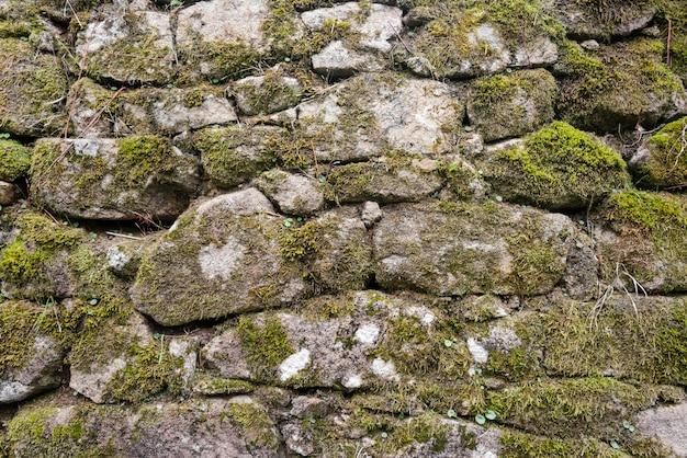 Wilder moosiger steinmauerhintergrund des alten schlosses