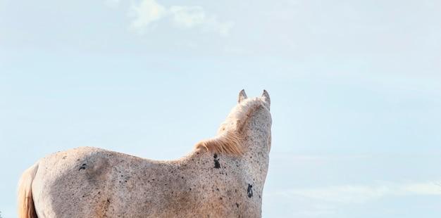 Wildes pferd im wald im freien