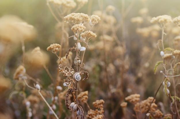 Wildes wiesengras unter morgensonnenlicht.