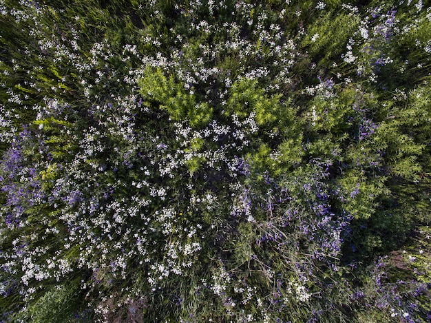 Wildfeld, blick von oben