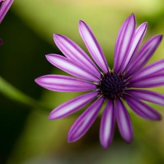 Wildflower am lake of the woods, ontario