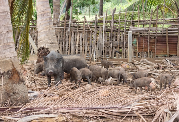 Wildschweinfamilie auf ländlichem bauernhof