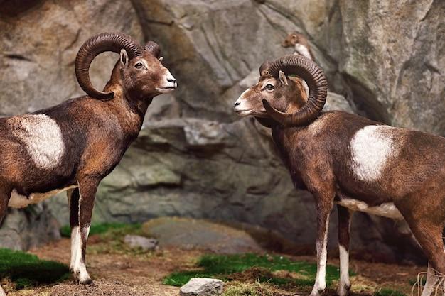 Wildtiere auf der naturausstellung