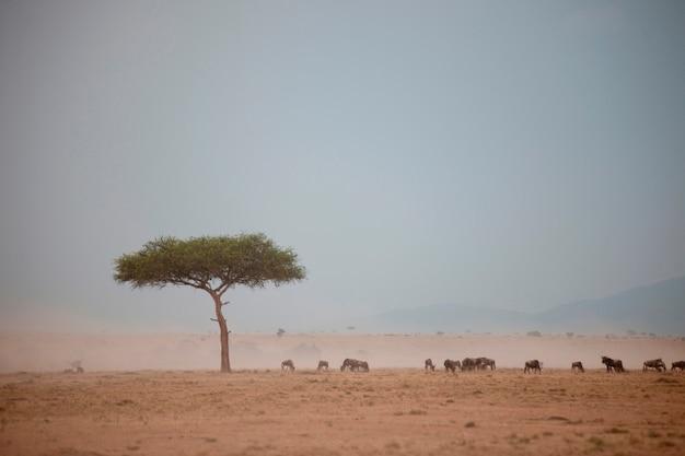 Wildtiere in kenia