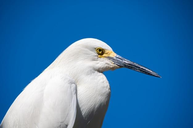 Wildtiere, nahaufnahme eines großen weißen fregattvogels