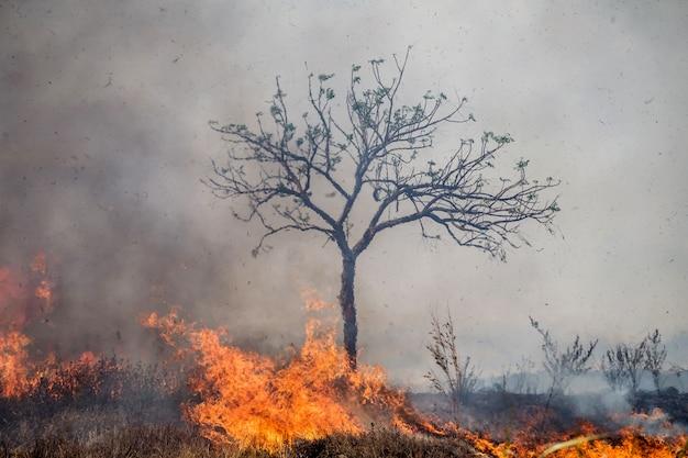 Wind, der auf lodernden bäumen während eines waldbrands durchbrennt.
