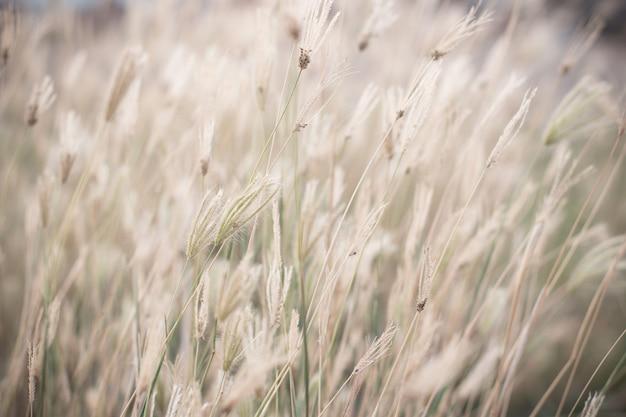 Wind geblasenes wildes gras. vintage-effekt-stil bild.