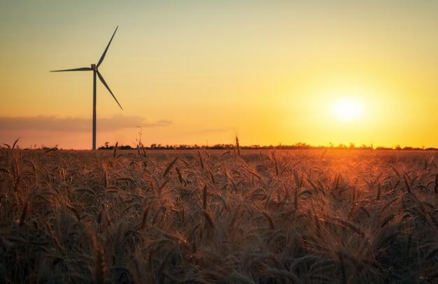 Windkraftanlagen und landwirtschaftliches feld an einem sommertag. energieerzeugung, saubere und erneuerbare energie.