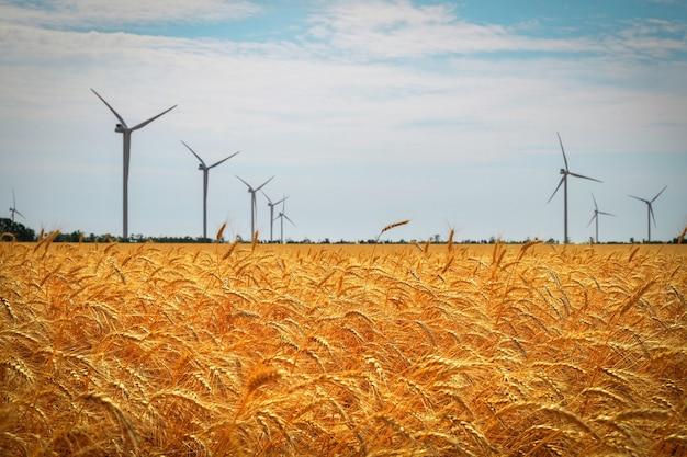 Windkraftanlagen und landwirtschaftliches feld an einem sommertag